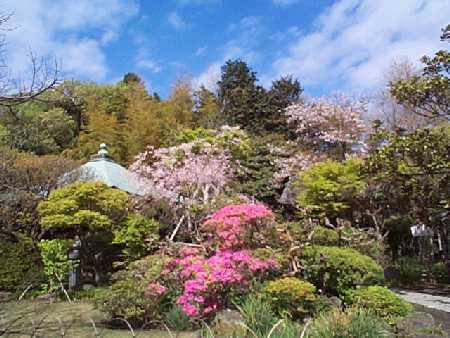 鎌倉・白藤の花_c0059854_19175433.jpg