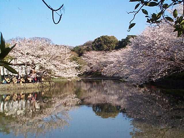 鎌倉・桜だより_c0059854_1934814.jpg