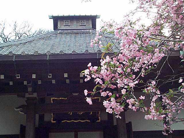 鎌倉・カイドウの花_c0059854_22353562.jpg