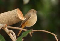 ■2月イベント・「鳥たちと遊ぶ」_b0049307_19565361.jpg