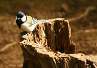 ■2月イベント・「鳥たちと遊ぶ」_b0049307_1958016.jpg