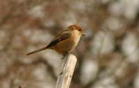 ■2月イベント・「鳥たちと遊ぶ」_b0049307_19581578.jpg