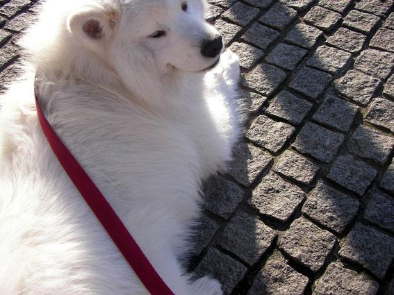 犬も歩けば、季節はめぐる〜嗚呼!春爛漫の花粉症!!_c0035838_23341073.jpg