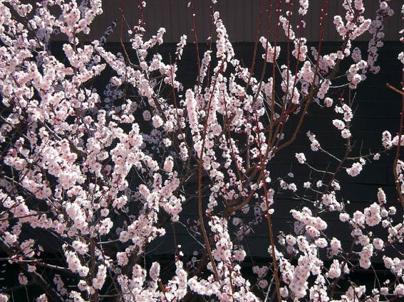 犬も歩けば、季節はめぐる〜嗚呼!春爛漫の花粉症!!_c0035838_23354476.jpg