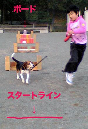 フライボールの練習 スポーツ広場編_b0005652_2050416.jpg