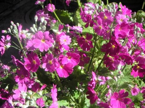 今日は雲一つない青空で、お花の手入れ日和です。_b0033423_12482162.jpg