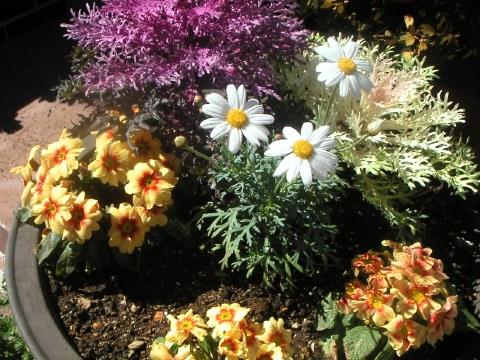 今日は雲一つない青空で、お花の手入れ日和です。_b0033423_12483654.jpg