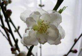 ほころぶ春_c0069048_024932.jpg