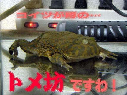 c0062287_1038114.jpg