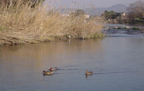 湖の鴨_a0024535_1112851.jpg