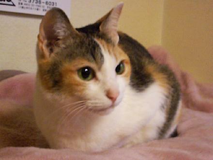 鼻息の荒い猫。 : ひびねこ。