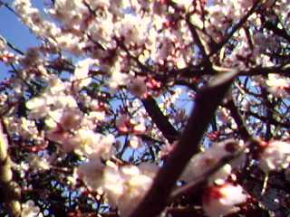 春らんらん♪_c0038117_22184930.jpg