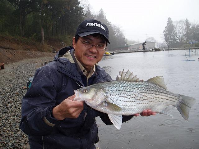 奥山文弥 Fumiya's Flyfishing Diary  徒然(釣れ?ズレ?)釣り日記