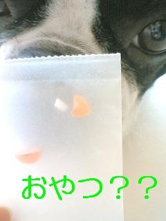 b0056096_15453075.jpg