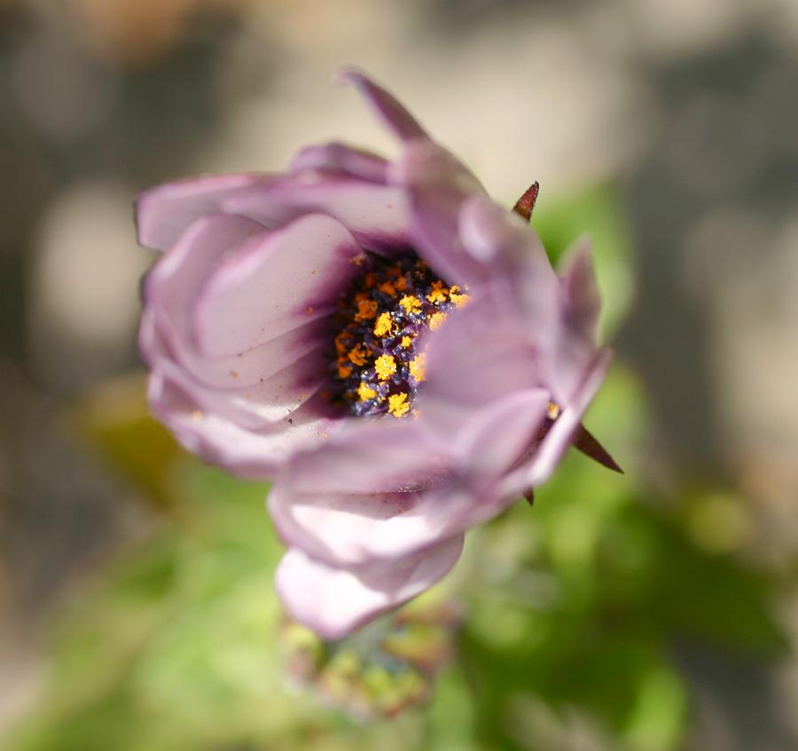 Flowers of Evil ♪_c0057800_20514123.jpg