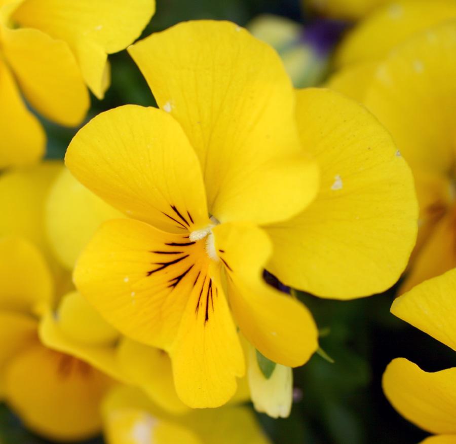 Flowers of Evil ♪_c0057800_20515936.jpg