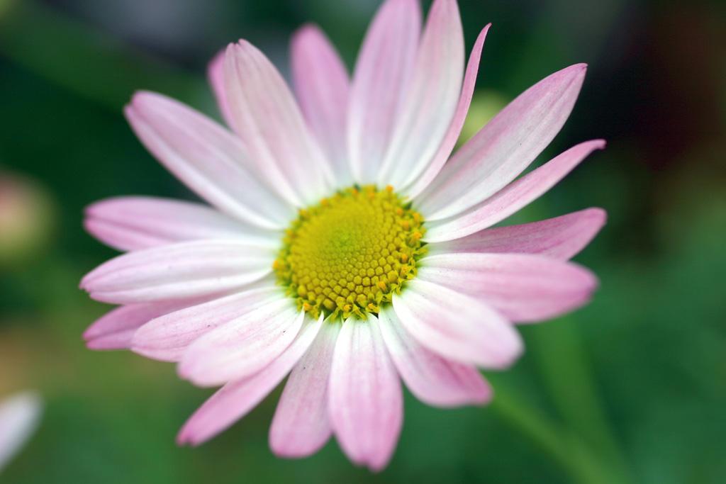 Flowers of Evil ♪_c0057800_20521372.jpg