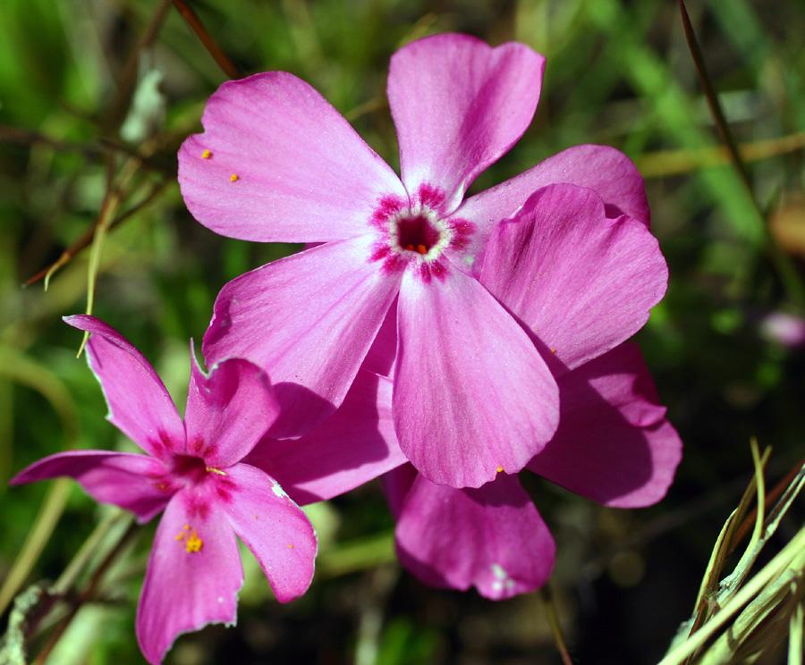 Flowers of Evil ♪_c0057800_2052294.jpg
