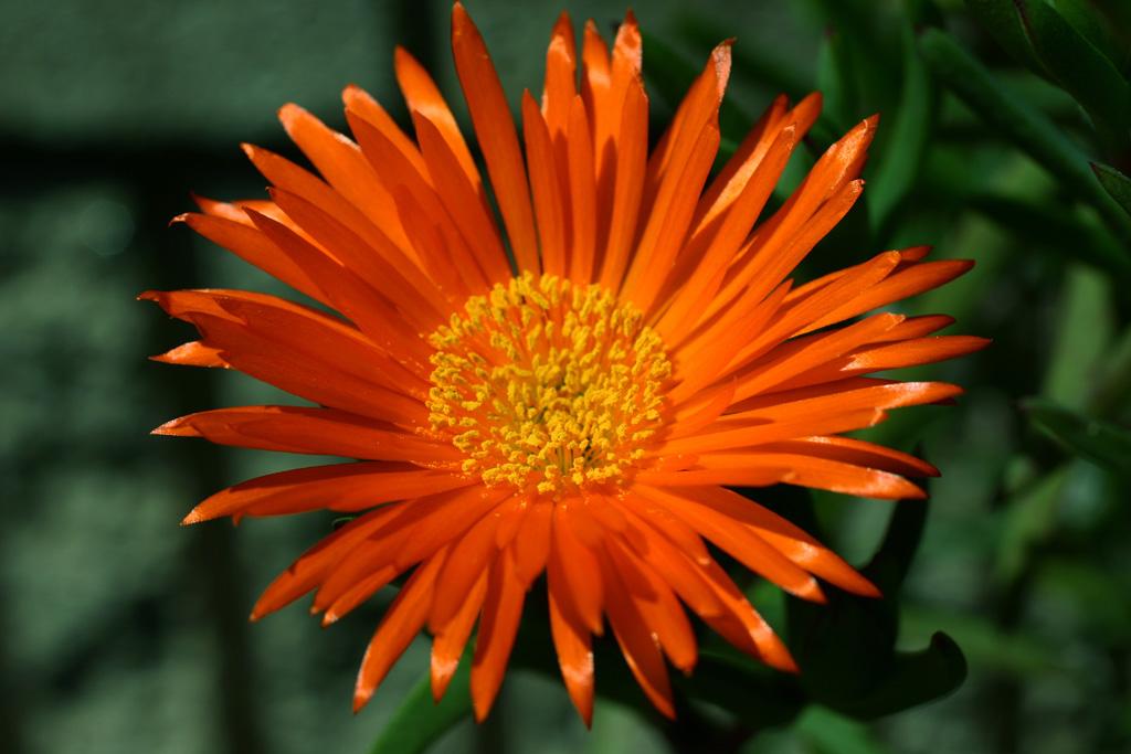 Flowers of Evil ♪_c0057800_20543231.jpg