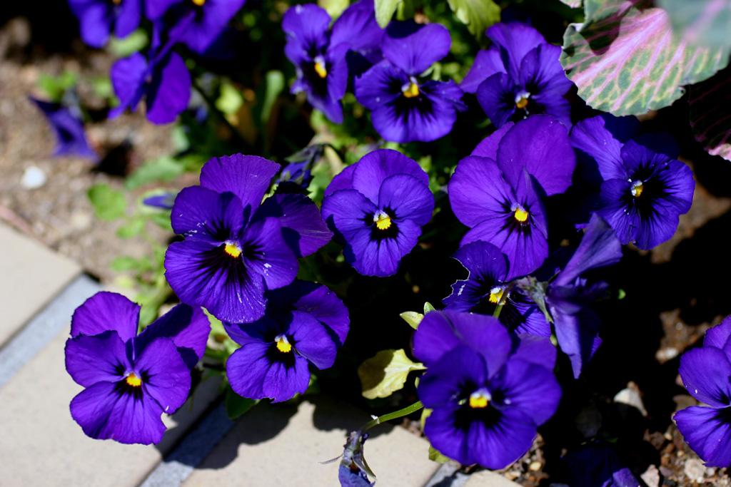 Flowers of Evil ♪_c0057800_20545088.jpg