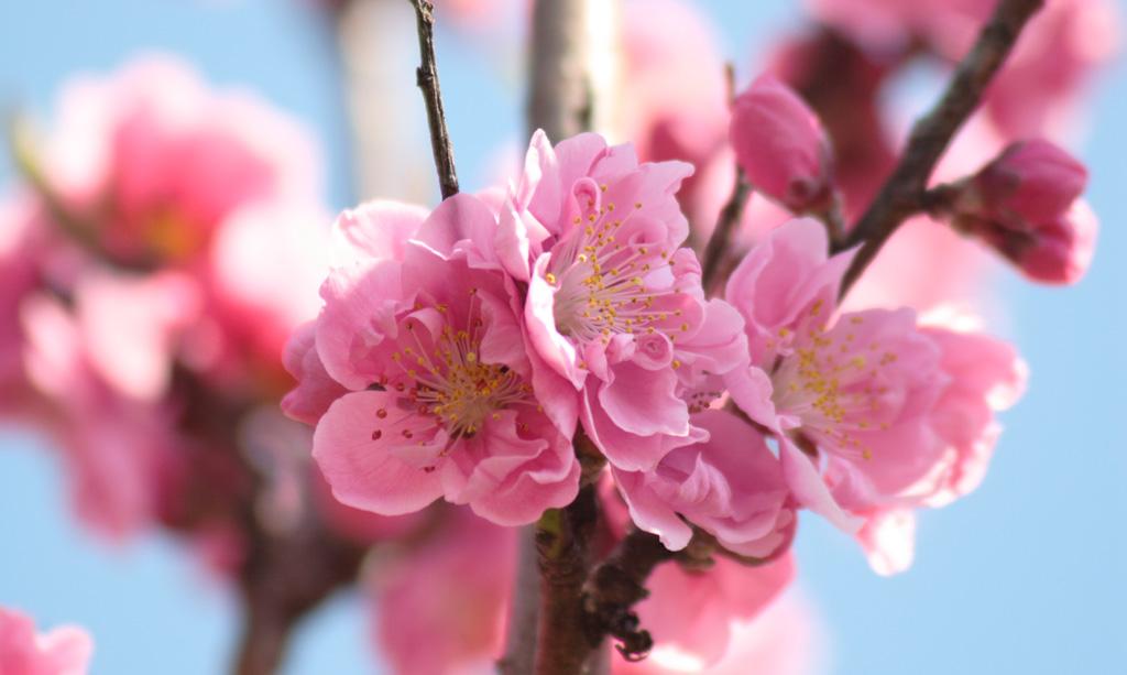 Flowers of Evil ♪_c0057800_20555799.jpg