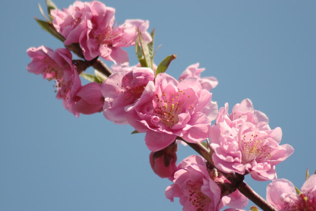 Flowers of Evil ♪_c0057800_20561160.jpg