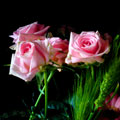 c0015708_22164597.jpg