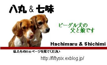 b0045357_11111877.jpg