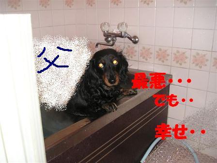 c0000189_1156863.jpg