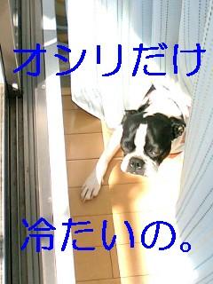 b0056096_15525980.jpg