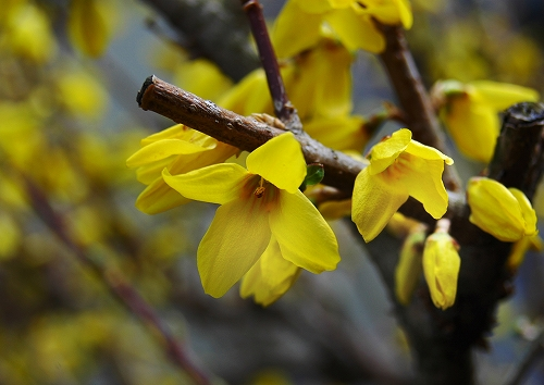 花の季節、到来_a0016161_204197.jpg