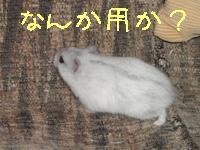 b0016983_1047212.jpg