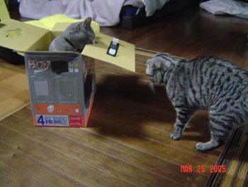 この後、取っ手のついたこの空き箱で、にゃんズ出前ごっこをして遊びました(笑)