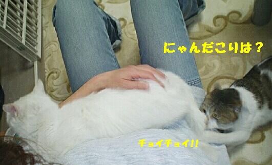 b0024945_21175927.jpg
