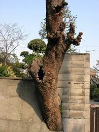 この木何の木、奇になる木_c0011501_22113531.jpg