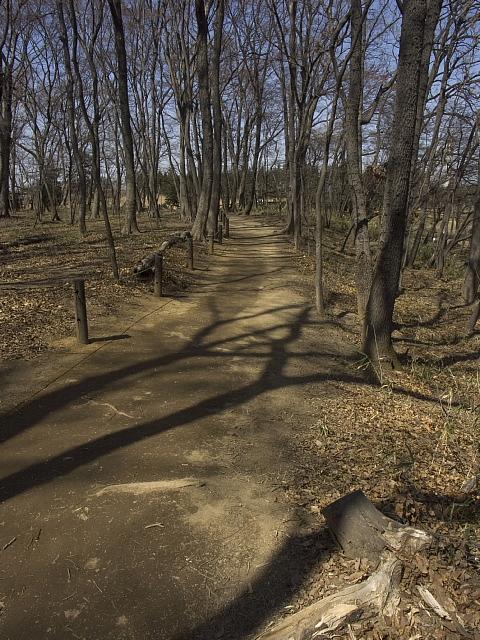 古河総合公園_b0010915_0582264.jpg
