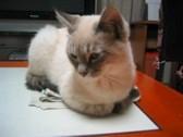 猫に☆ちょびっと役立つシリーズ1_c0006826_714963.jpg