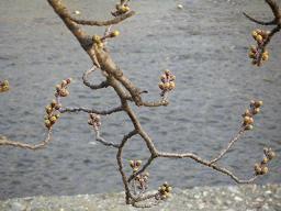 やっと春らしく_c0049950_2254770.jpg