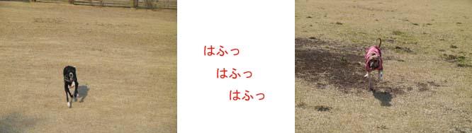 b0060803_21401391.jpg
