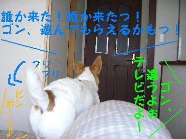c0011766_10464262.jpg