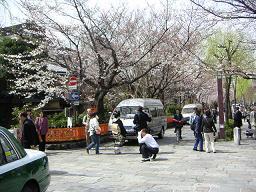 祇園の桜どすえ_c0049950_22191289.jpg