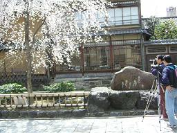 祇園の桜どすえ_c0049950_22224585.jpg