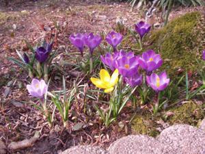 穏やかな春の日差し カラーについて_b0058290_14493990.jpg