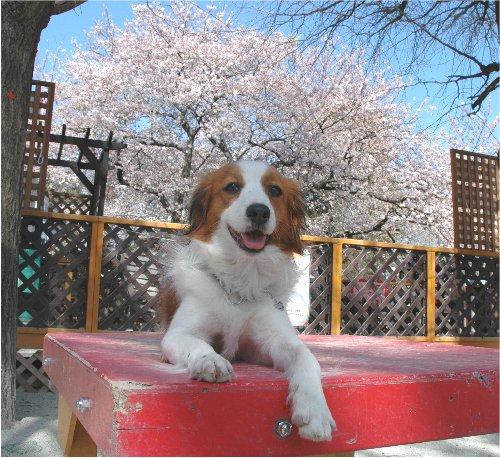 桜の下で_c0065512_21375513.jpg