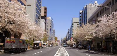市ヶ谷・四ツ谷の桜_a0003650_23404544.jpg