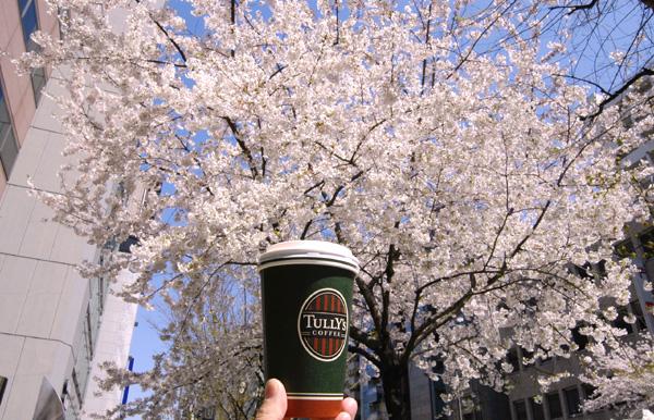 市ヶ谷・四ツ谷の桜_a0003650_23412681.jpg