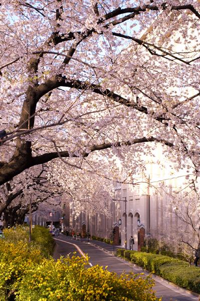 市ヶ谷・四ツ谷の桜_a0003650_23433415.jpg