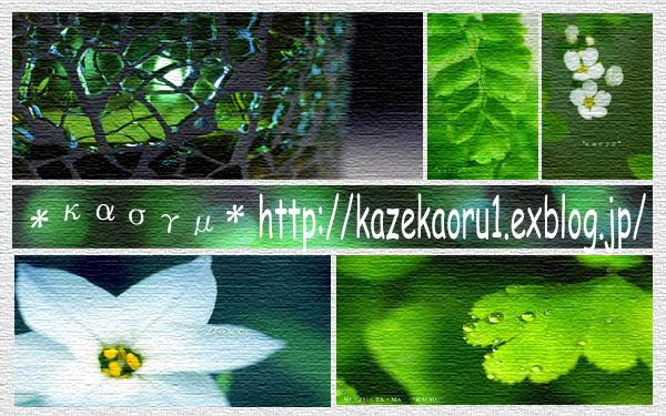 c0036880_17355220.jpg
