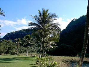 ハワイ島にて_a0006822_005015.jpg