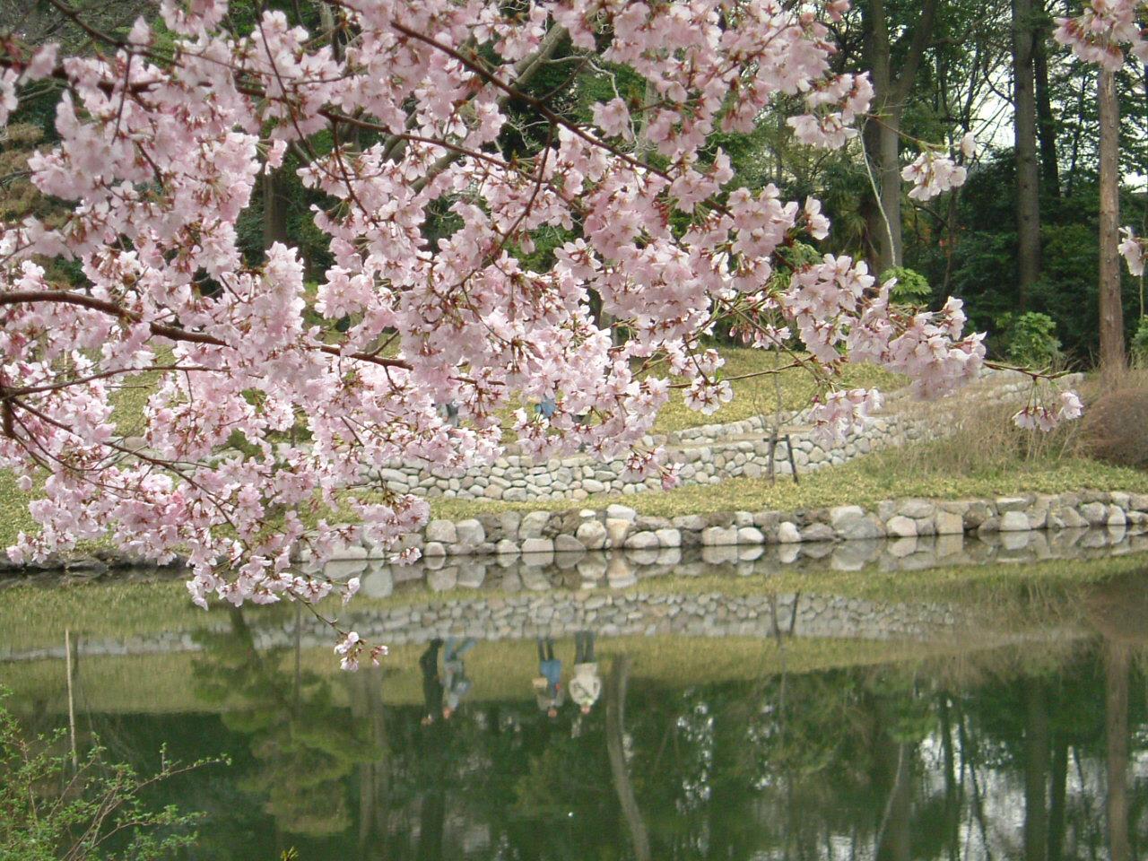 Imagenes De Paisajes Japoneses